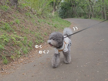 小室山20150416-7