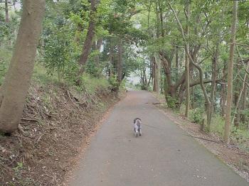小室山20150416-8