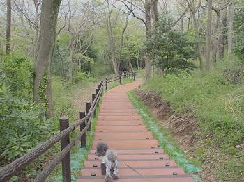 小室山20150416-23