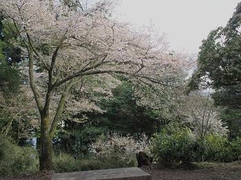 箱根20150417-22