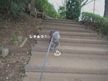 公園20150419-1