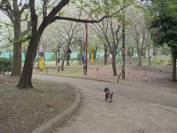 公園20150419-4
