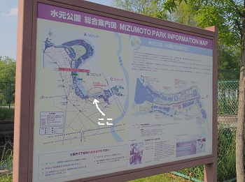 水元公園20150502-2