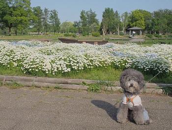 水元公園20150502-7
