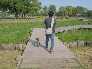 水元公園20150502-8
