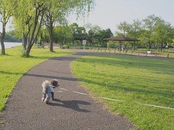 みさと公園20150502-5