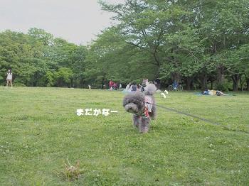柏の葉公園20150503-6