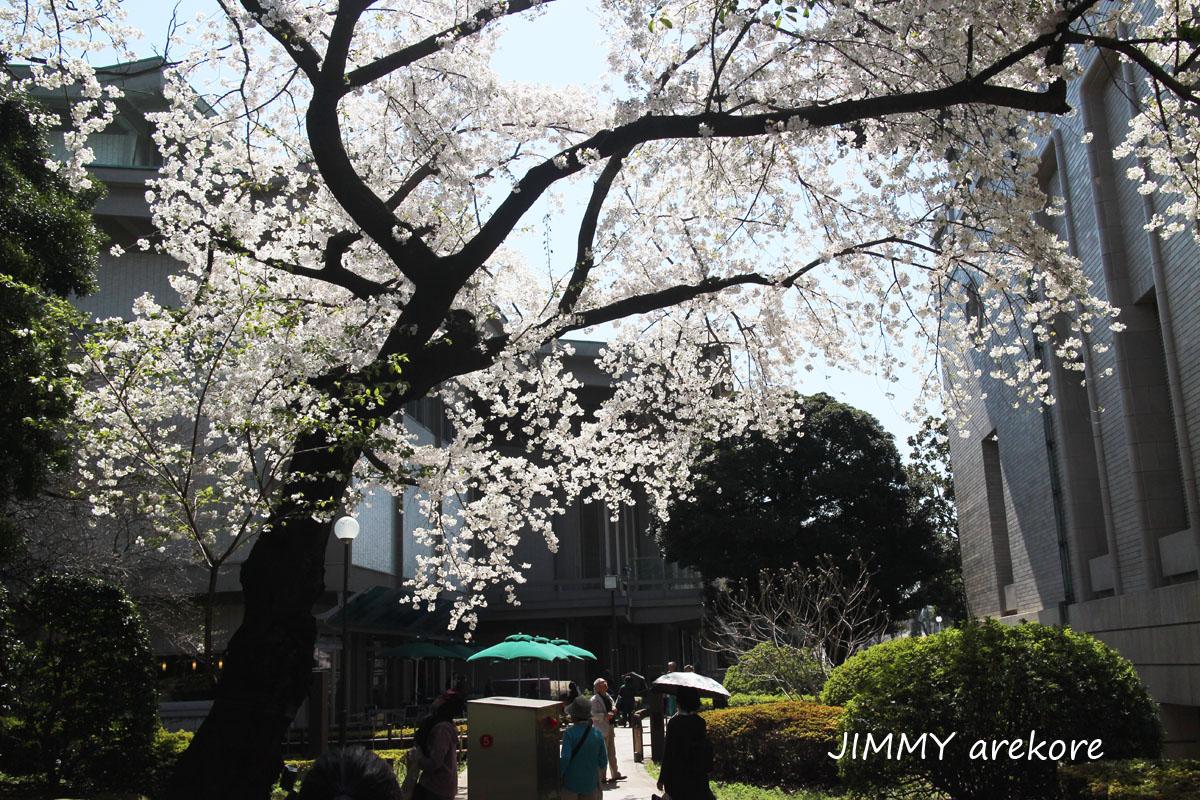 13_3482sakura.jpg