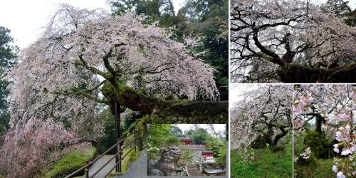 瀧蔵神社1