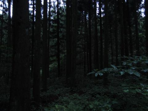 15-07-09-F01.jpg