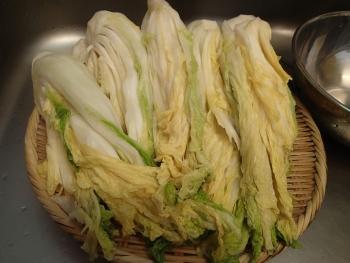 塩漬け白菜絞り