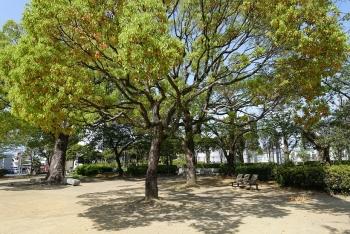 常磐公園の樹
