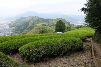賎機山茶畑