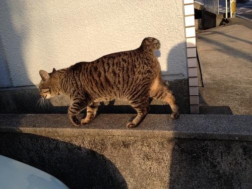 長崎の猫1