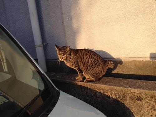 長崎の猫2