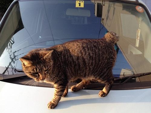 長崎の猫3