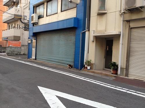 長崎の猫5