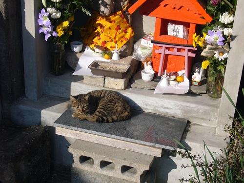 長崎の猫9