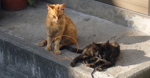 長崎の猫10