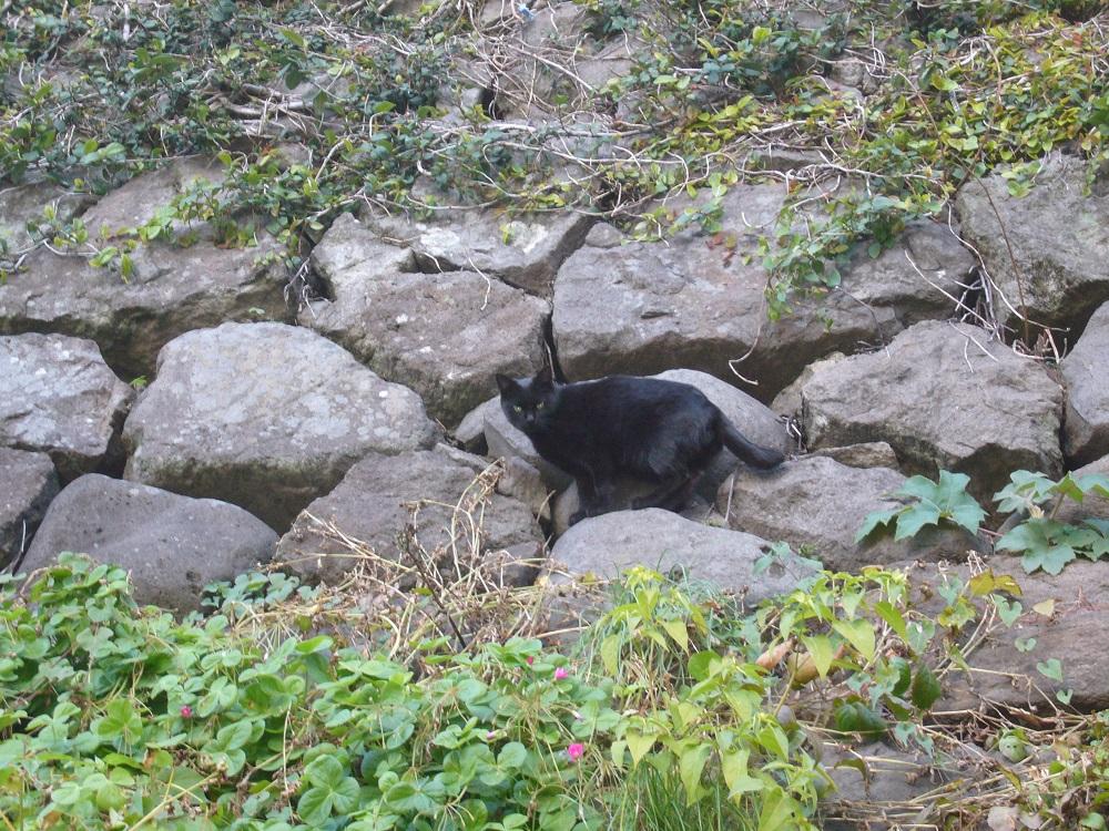 長崎の猫11