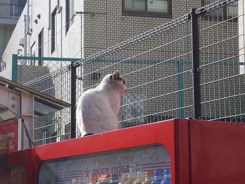 長崎の猫12