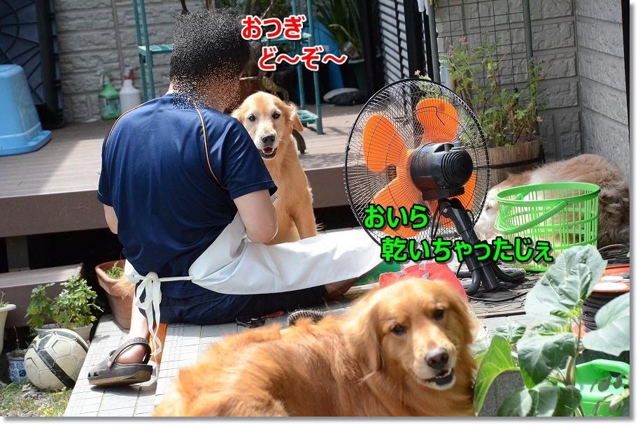 DSC_8579_201506171022510b4.jpg