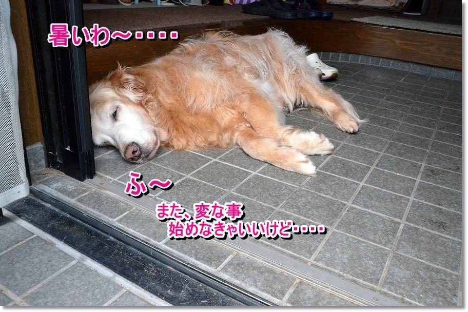 DSC_9105_20150630090152553.jpg