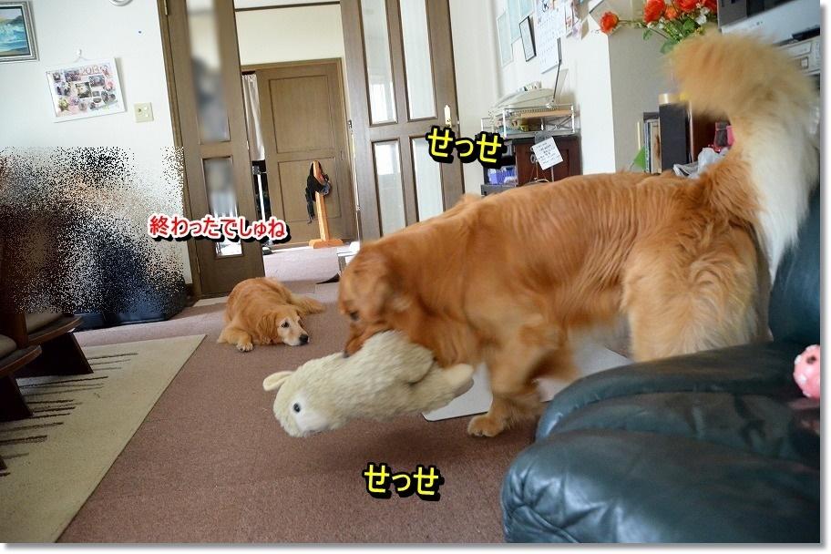 DSC_9370_20150629101753931.jpg