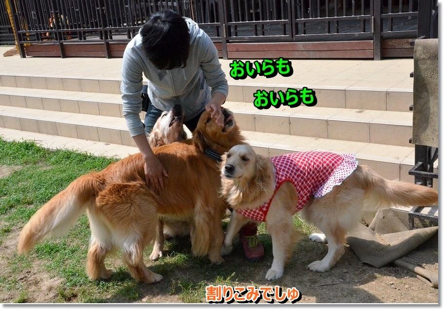 DSC_9380_20150625083329df3.jpg