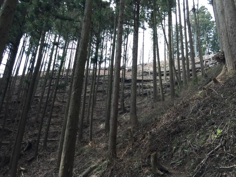 kagenobuyama12.jpg