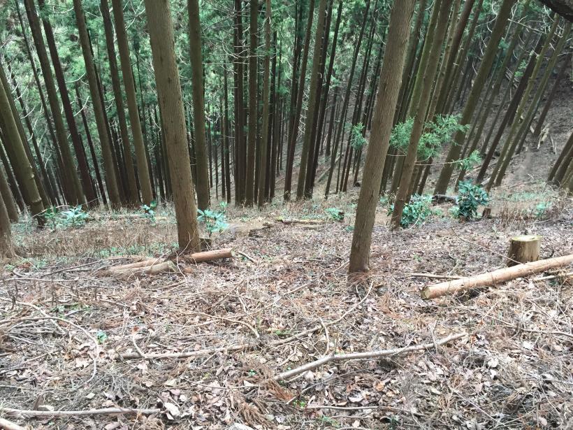 kagenobuyama16.jpg