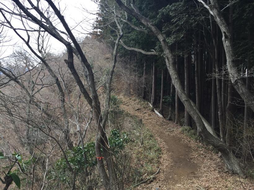 miyagaseminamiyama38.jpg