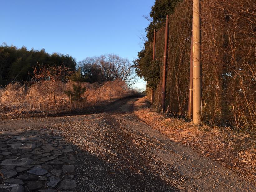 oyamadaryokutiZ35.jpg