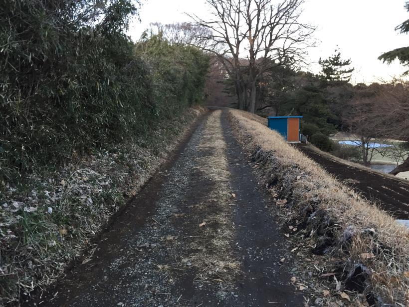 oyamadaryokutiZ43.jpg