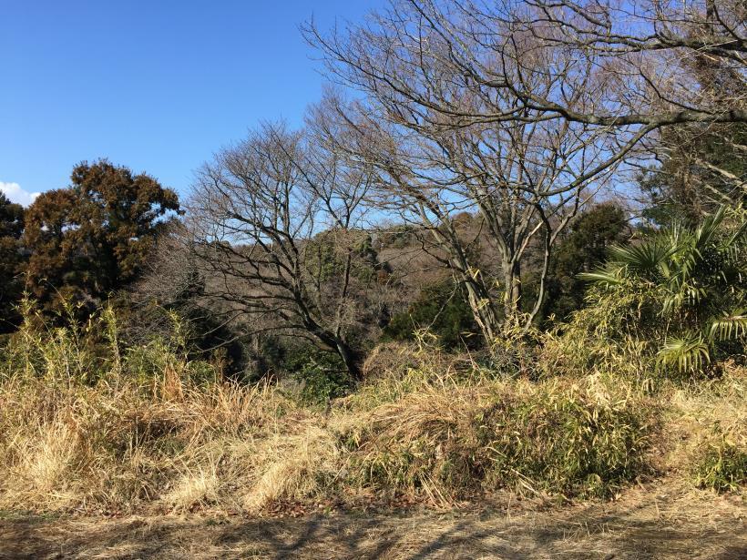 tachindai35.jpg