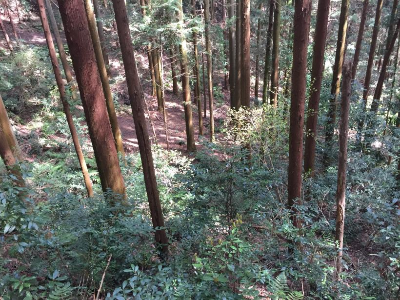 takimakura100.jpg