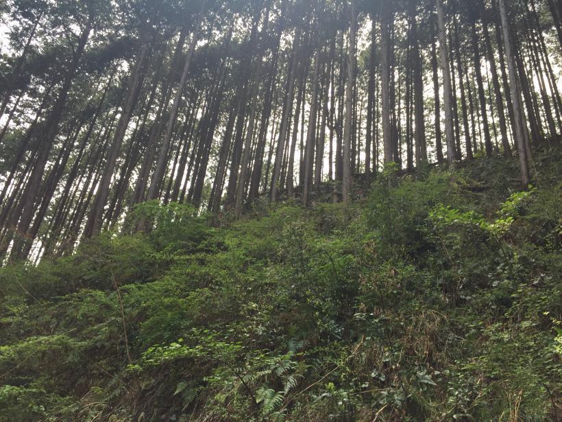 takimakura55.jpg