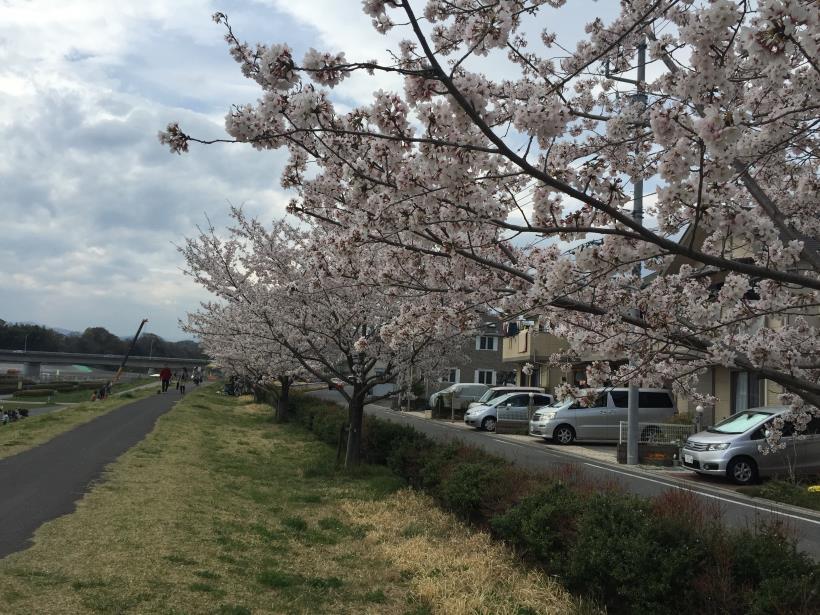 takiyamakusabanaA02.jpg
