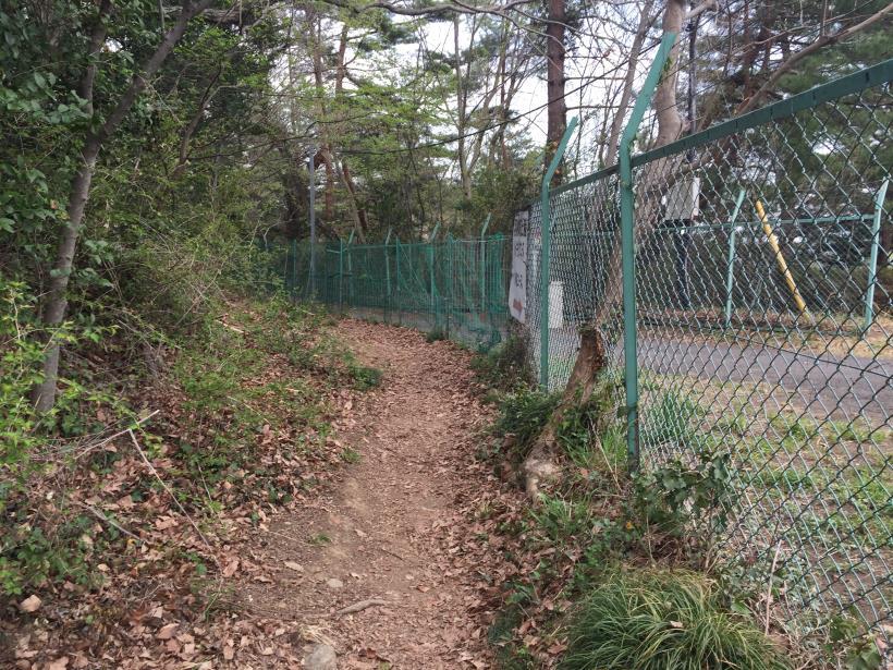takiyamakusabanaA22.jpg