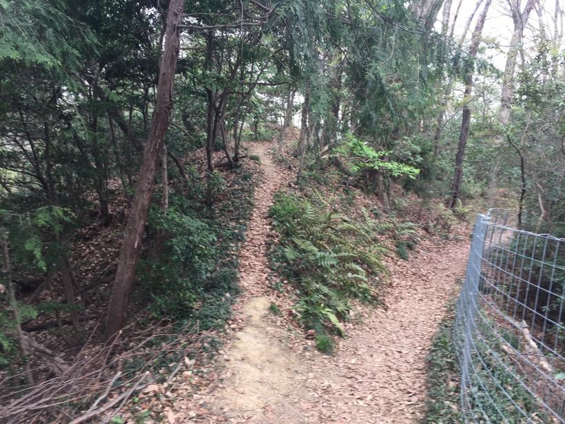 takiyamakusabanaA32.jpg