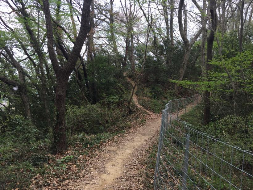 takiyamakusabanaA39.jpg
