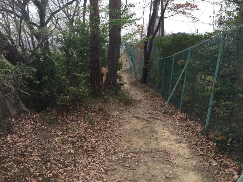takiyamakusabanaA51.jpg