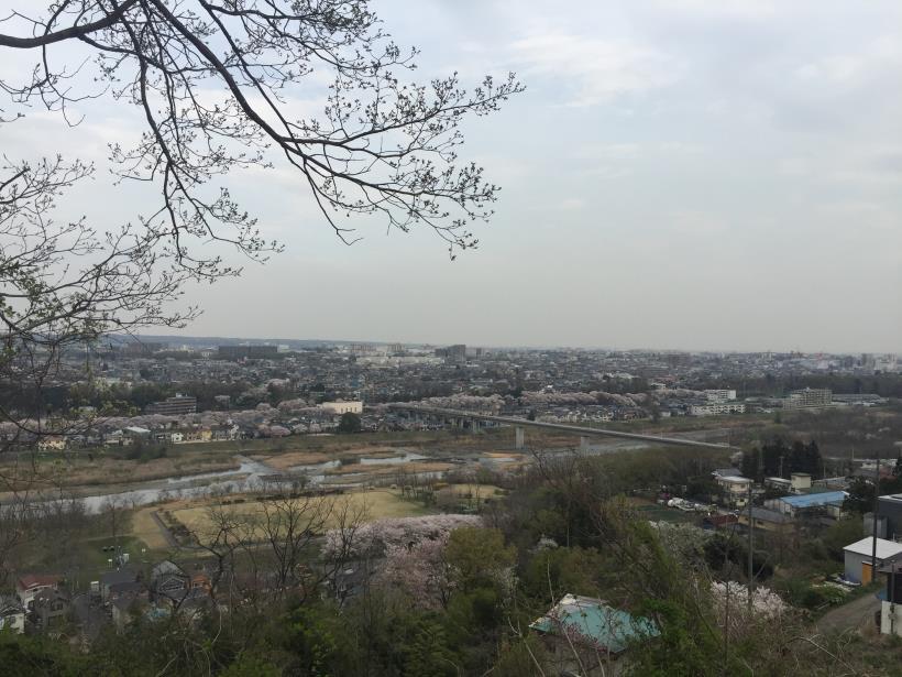 takiyamakusabanaA55.jpg