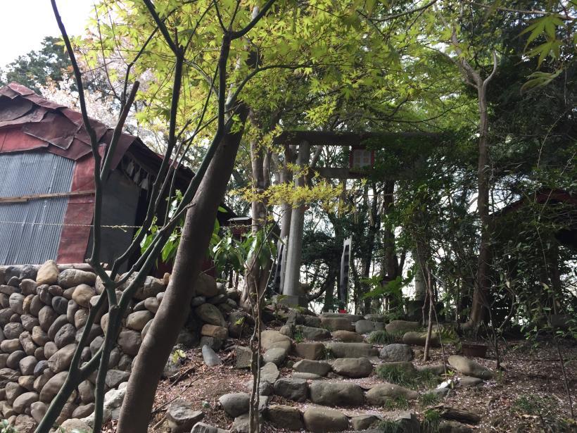 takiyamakusabanaA63.jpg