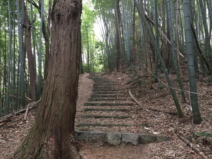takiyamakusabanaA79.jpg