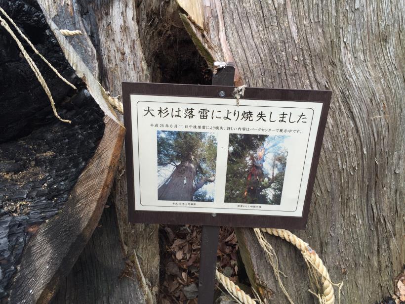 tukuisiroyamagezan04.jpg