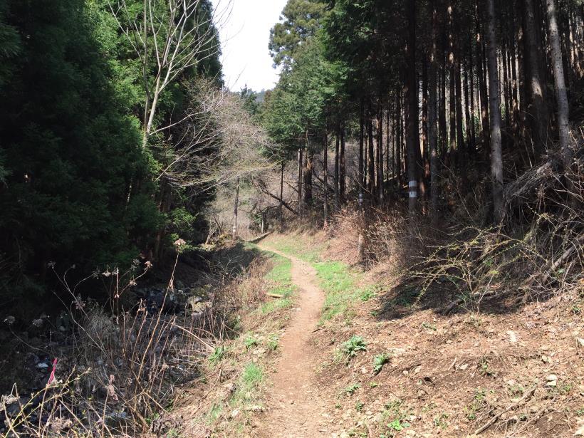yagosawa08.jpg