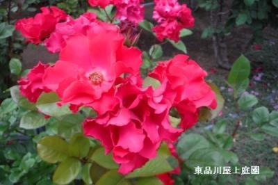 DSCF5976.jpg