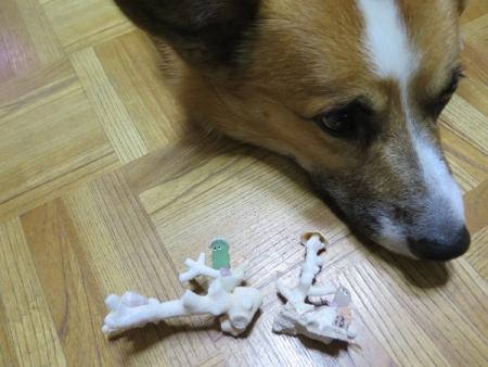 キョロ目ちゃんと犬