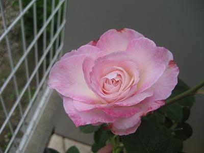 s-IMG_6364.jpg